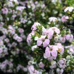 flowers-spring-clean Photo Steve Davis